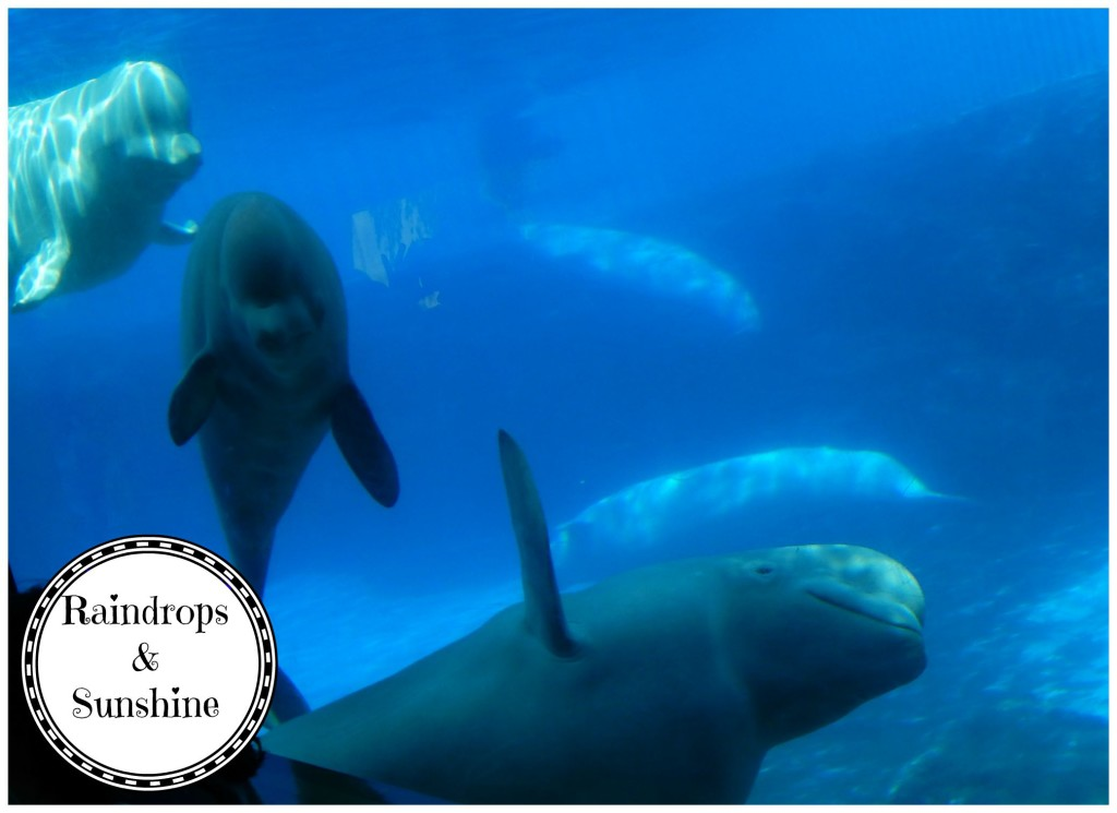 Marineland Bulga