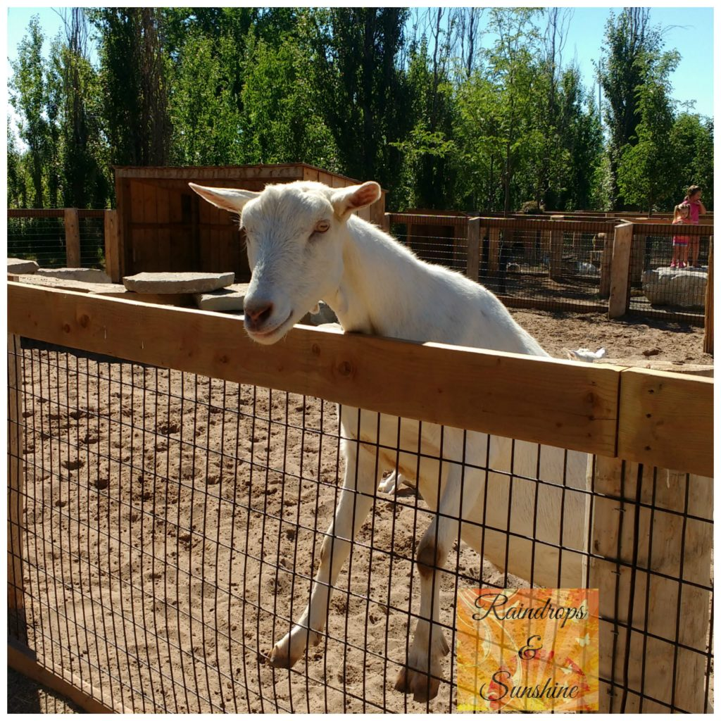 Safari Niagara Goat