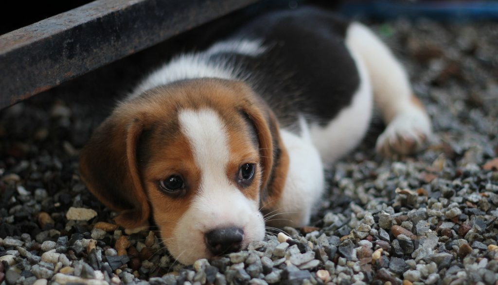 Puppy Biting Training – Everything you Need to Know